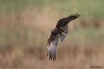 08. Birds of Prey (Αρπακτικά)