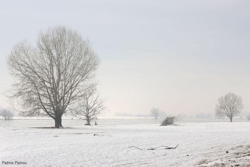 lake_kerkini_2010-12