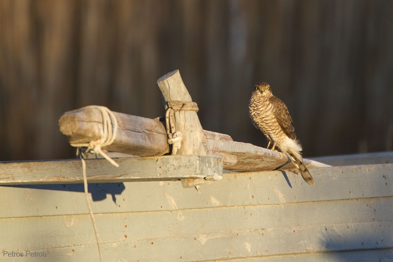 sparrowhawk_lake_petron_2010-12