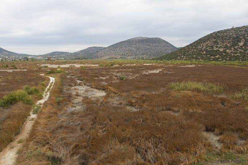shinias_wetlands_2010-10