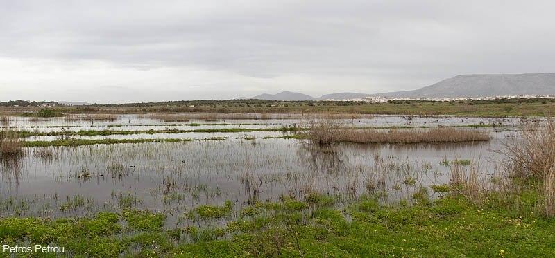 lake-loutros-spata-greece_2013-03