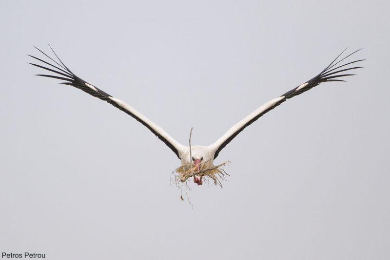 white-stork_2014-05_lake-karla